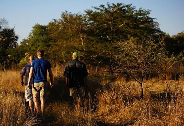 Victoria Falls bush walk