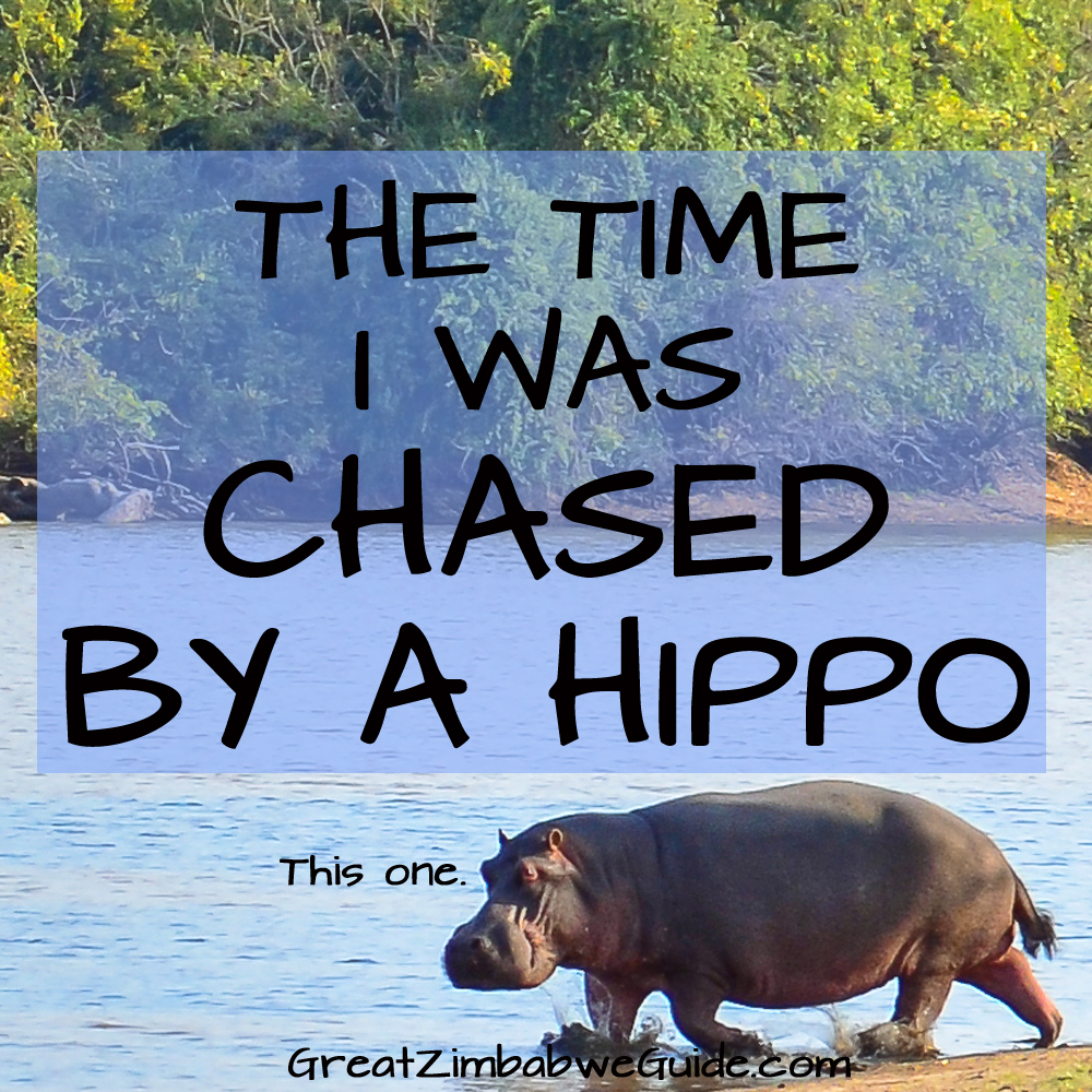 chased-by-a-hippo-zimbabwe-africa