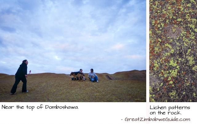 Domboshawa lichen