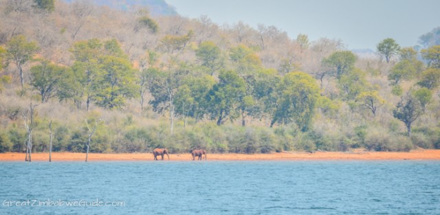 Kariba ferries elephant