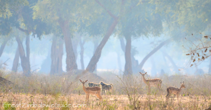Mana Pools mist Zimbabwe