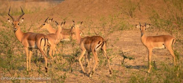 Wildlife Zimbabwe