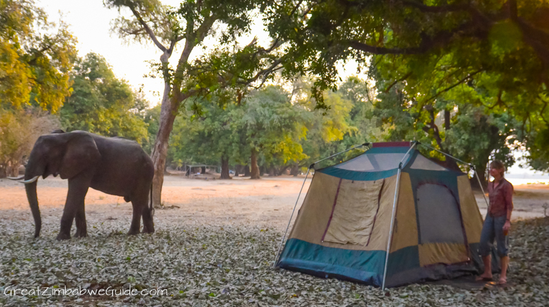 Mana Pools elephant at camp