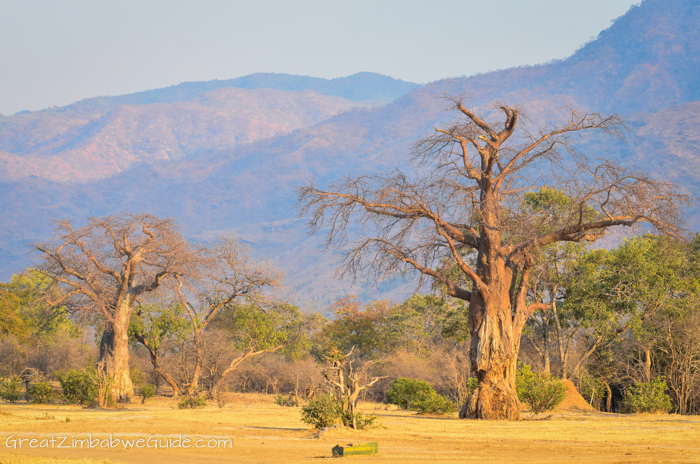 Mana Pools landscape