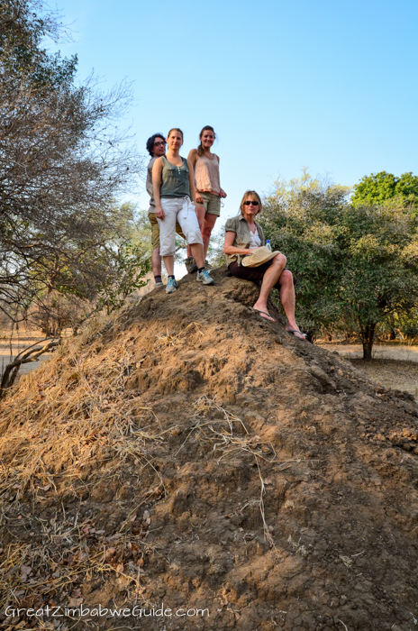 Mana Pools Zim anthill