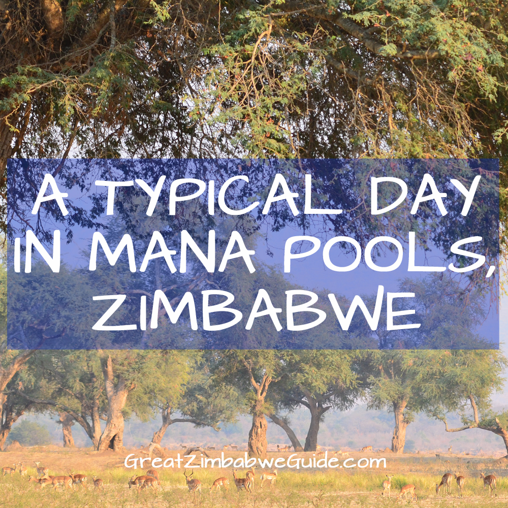 Image result for Mana Pools game reserve
