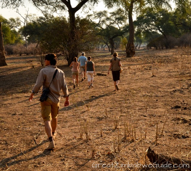 Mana Pools walking