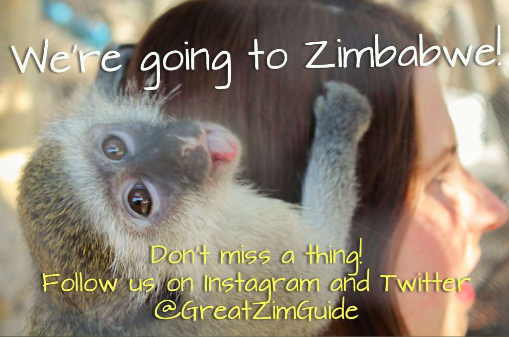 Zimbabwe Travel Updates Instagram Monkey