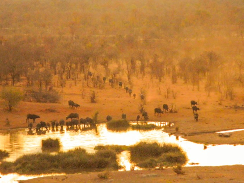 Waterhole Africa Sunset