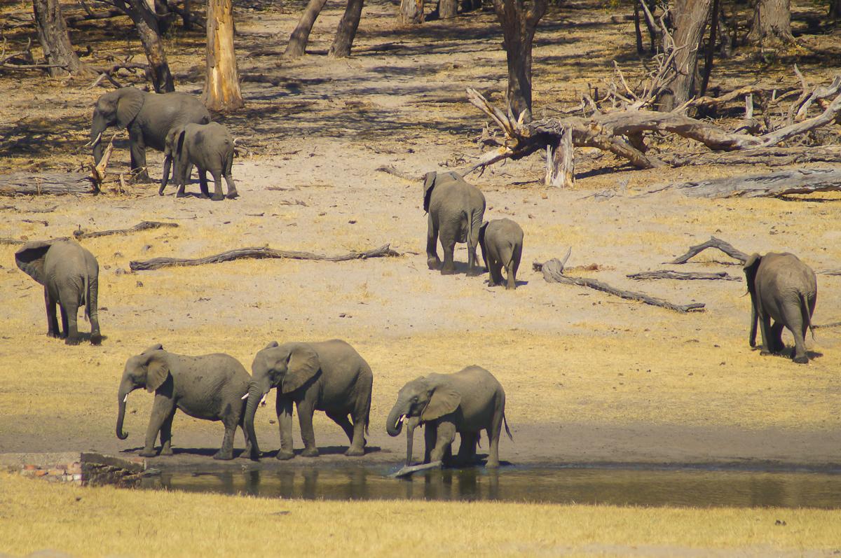 Hwange elephants lodge