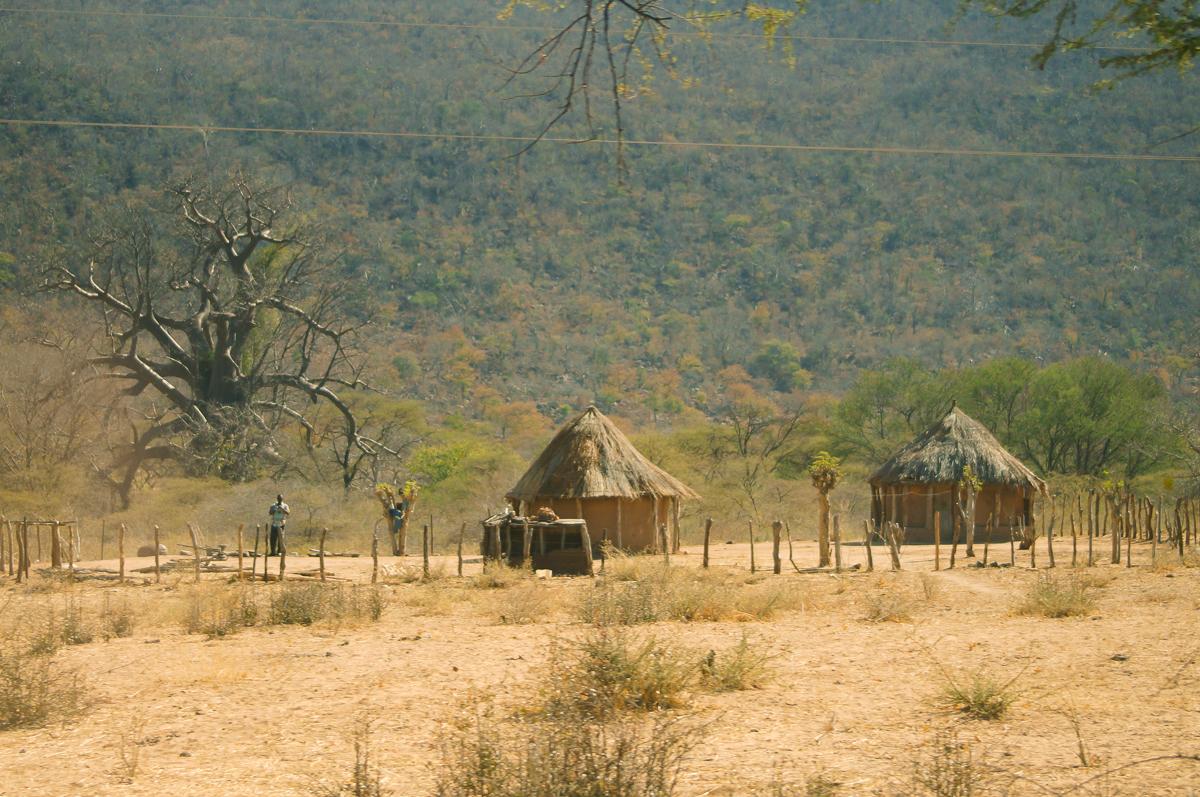 hwange park zimbabwe