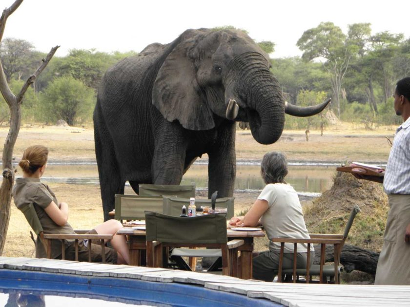 HWANGE-NATIONAL-PARK-ELEPHANTS-ZIMBABWE-TOUR-SAFARI