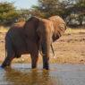 Spurwing Zimbabwe Kariba Game Drive 37
