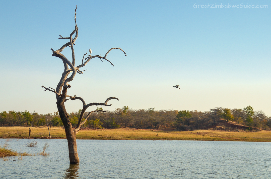 Matusadona National Park Kariba Zimbabwe Wildlife