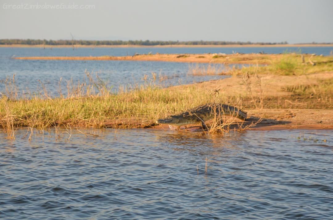 Matusadona National Park Kariba Zimbabwe Crocodile