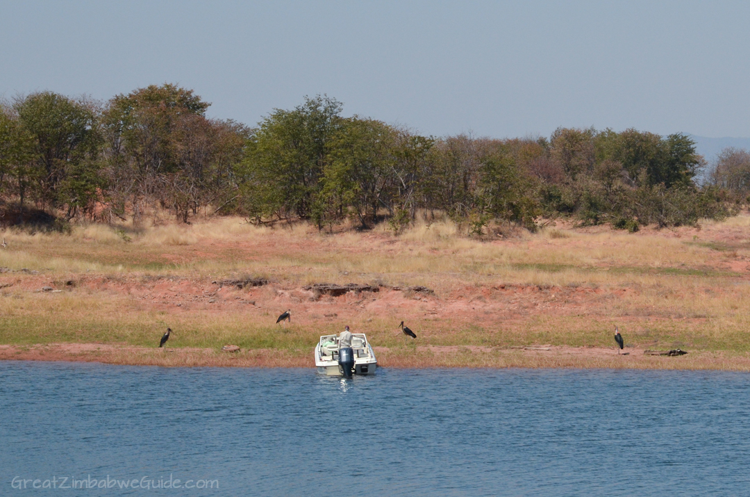 Laka Kariba Zimbabwe Hippo Bird Viewing