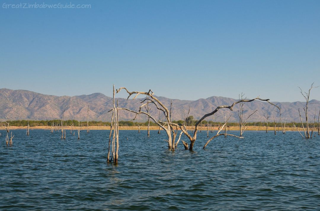 Lake Kariba Zimbabwe Drowned Forest
